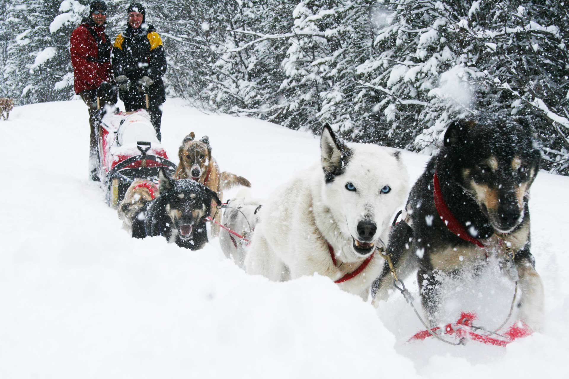 Slide 1 - home Dog Sledding