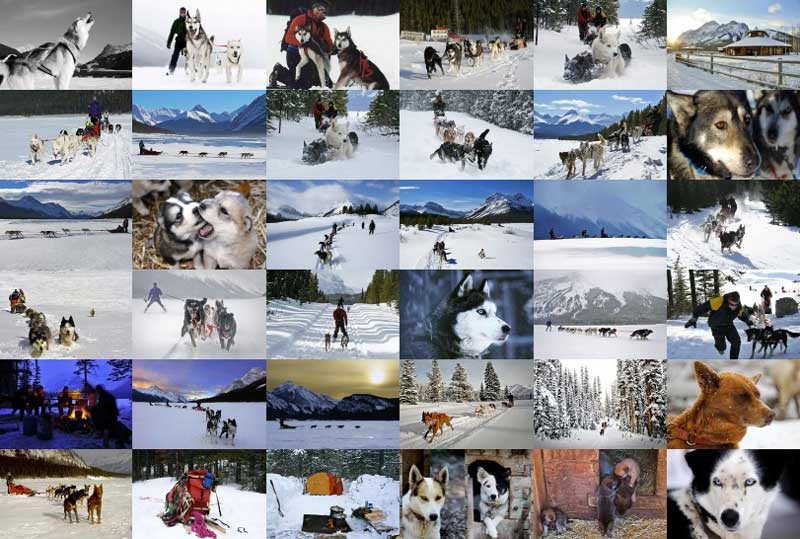 Mad Dogs Englishmen - Dog Sledding Kennels Skijor home