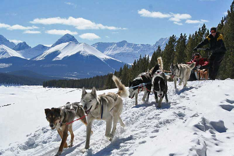 Mountain Musher- 2 Hour Tour