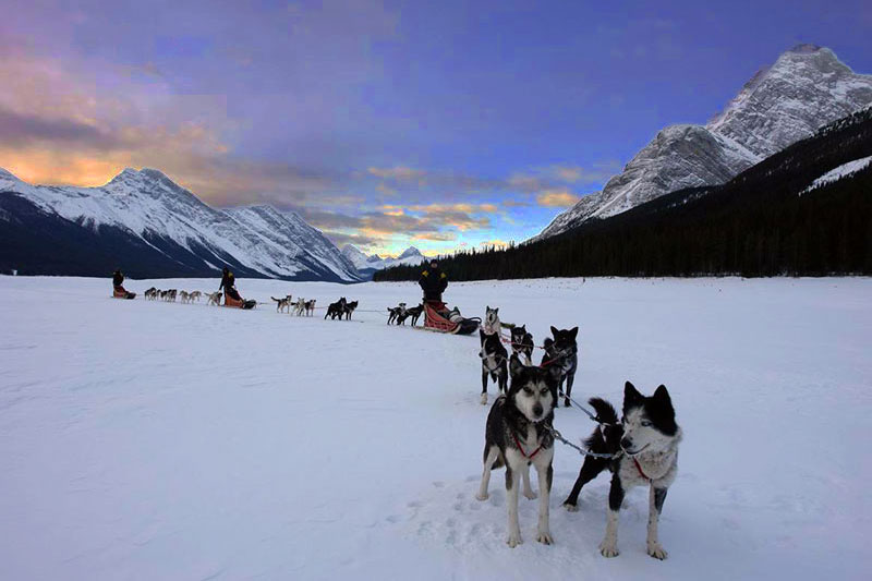 Dogsled under the Stars